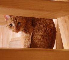 кот Микеш — талисман