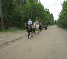 прогулки конного клуба