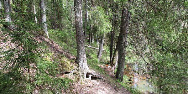 леса вокруг